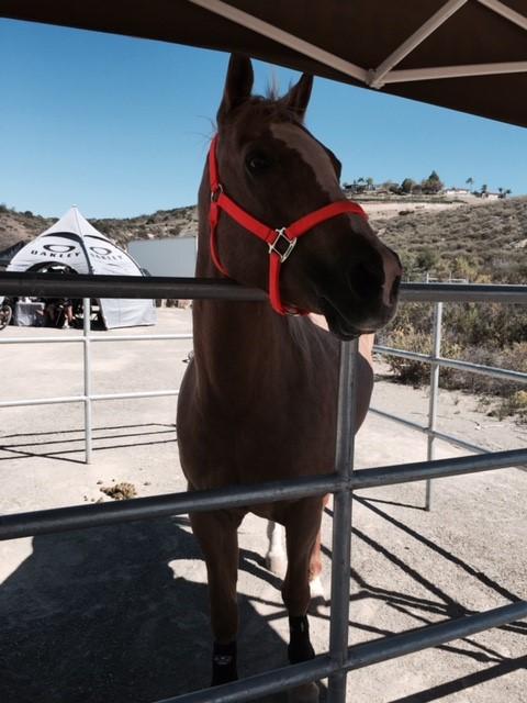 Horsetrader com
